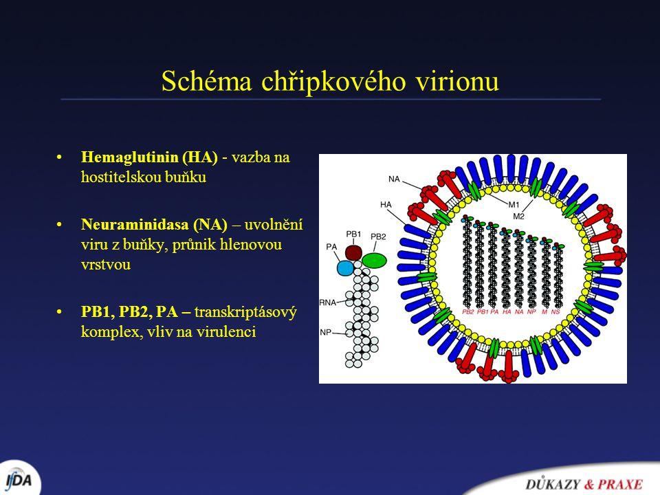 Schéma chřipkového virionu