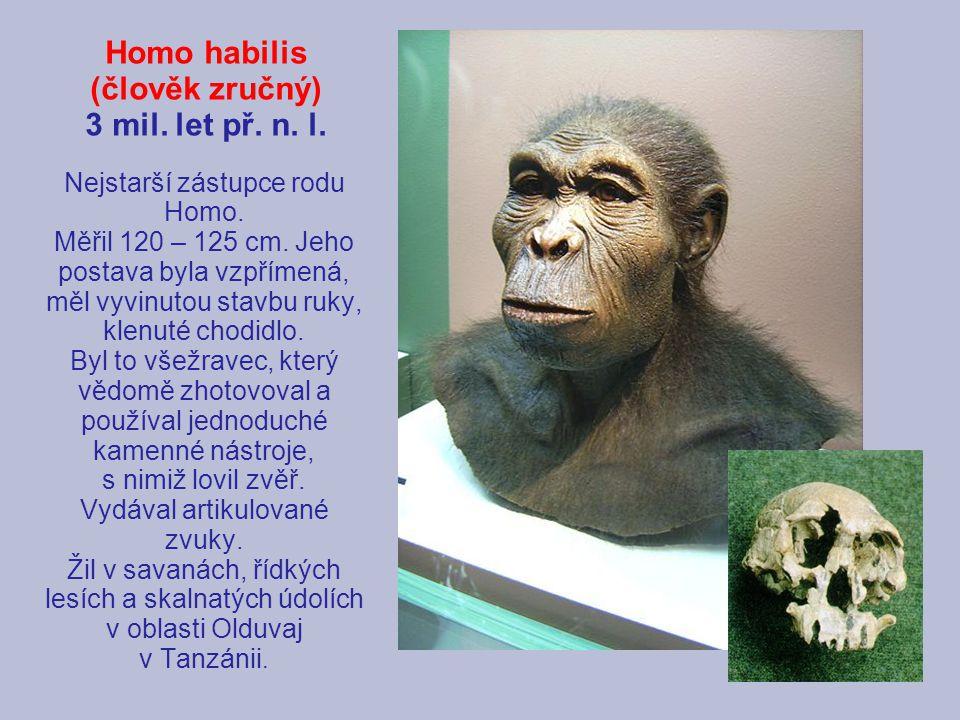 Homo habilis (člověk zručný) 3 mil. let př. n. l.