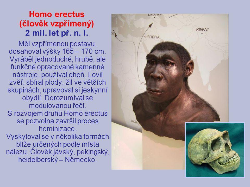 Homo erectus (člověk vzpřímený) 2 mil. let př. n. l.