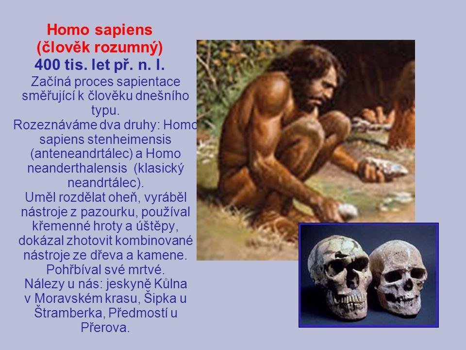 Homo sapiens (člověk rozumný) 400 tis. let př. n. l.