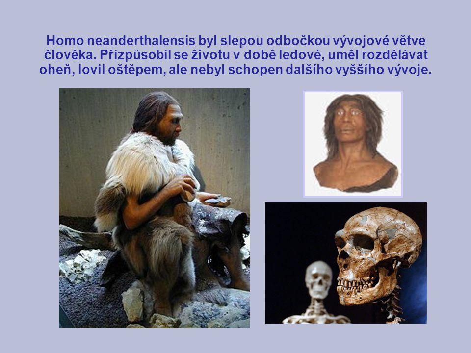 Homo neanderthalensis byl slepou odbočkou vývojové větve člověka
