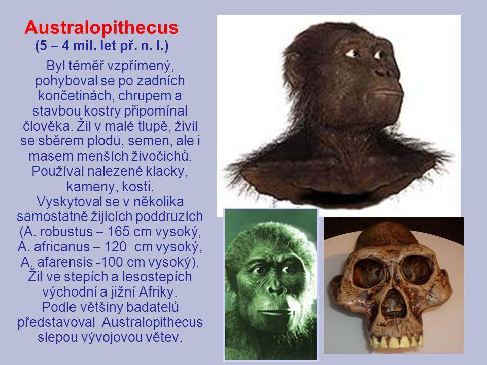 Australopithecus (5 – 4 mil. let př. n. l.)