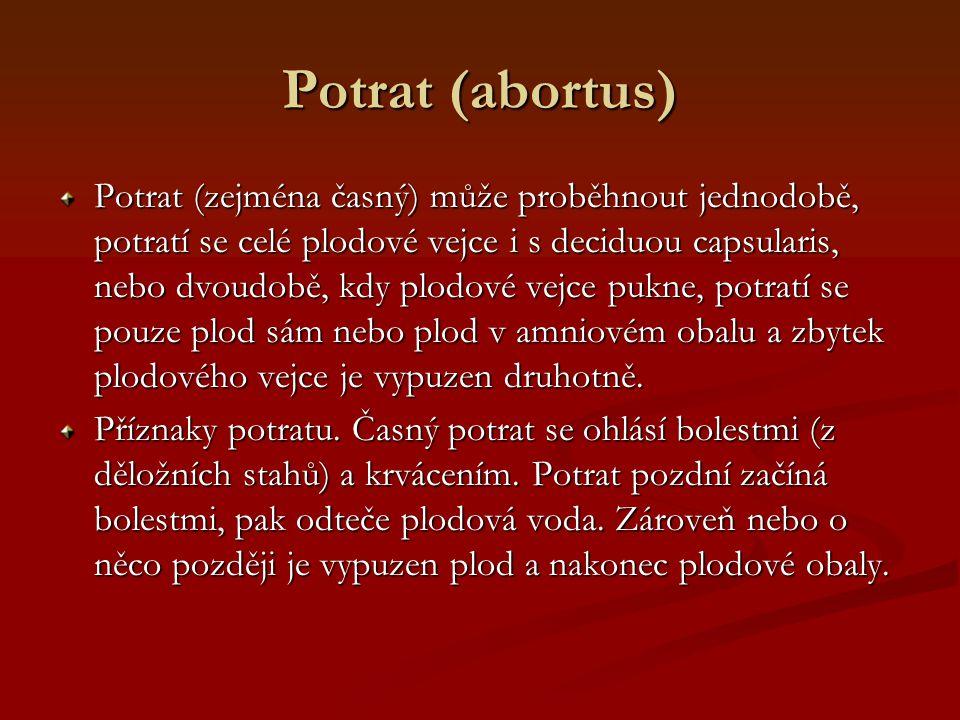 Potrat (abortus)