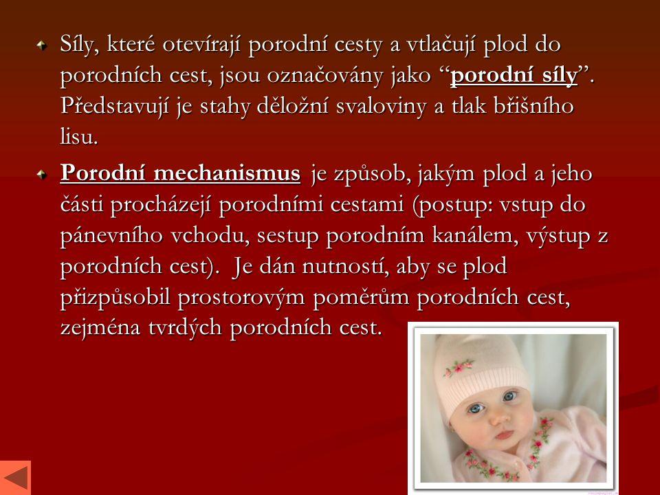 Síly, které otevírají porodní cesty a vtlačují plod do porodních cest, jsou označovány jako porodní síly . Představují je stahy děložní svaloviny a tlak břišního lisu.