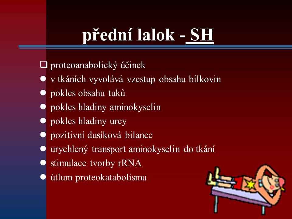 přední lalok - SH proteoanabolický účinek