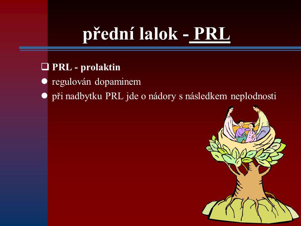 přední lalok - PRL PRL - prolaktin regulován dopaminem
