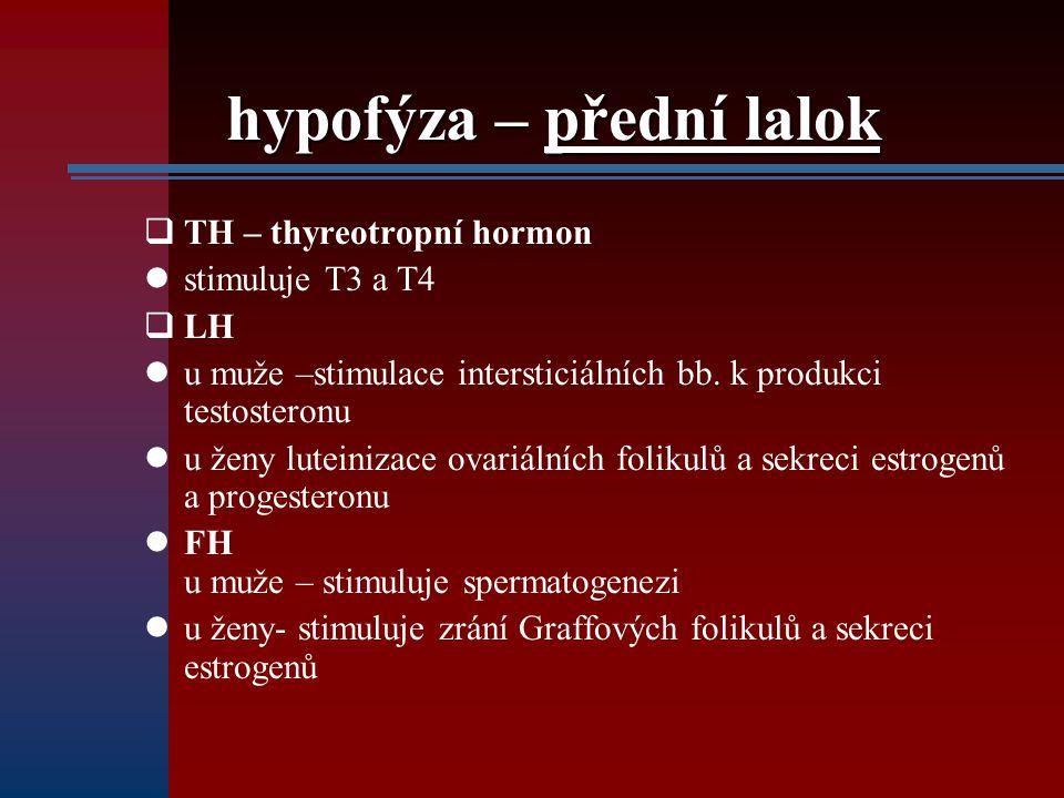 hypofýza – přední lalok