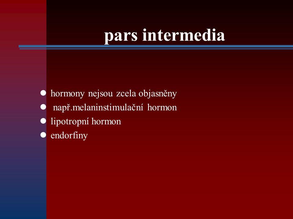 pars intermedia hormony nejsou zcela objasněny