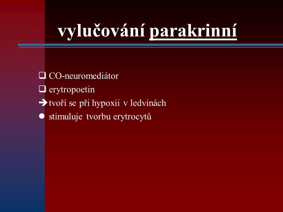 vylučování parakrinní