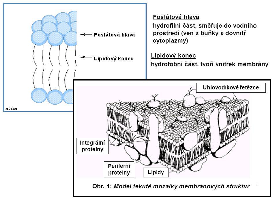 Obr. 1: Model tekuté mozaiky membránových struktur