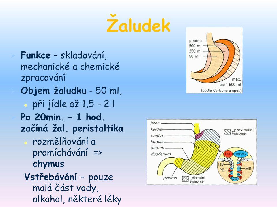 Žaludek Funkce – skladování, mechanické a chemické zpracování