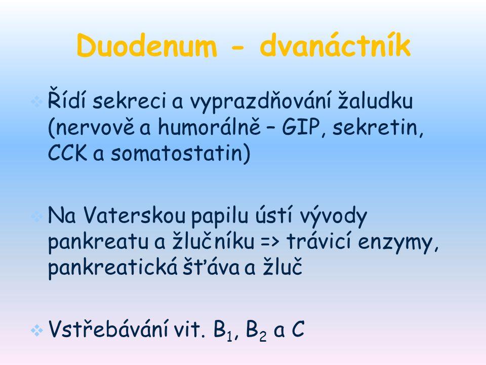 Duodenum - dvanáctník Řídí sekreci a vyprazdňování žaludku (nervově a humorálně – GIP, sekretin, CCK a somatostatin)