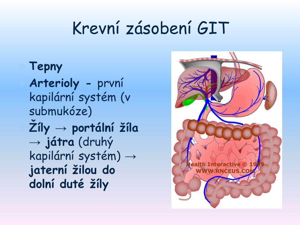 Krevní zásobení GIT Tepny