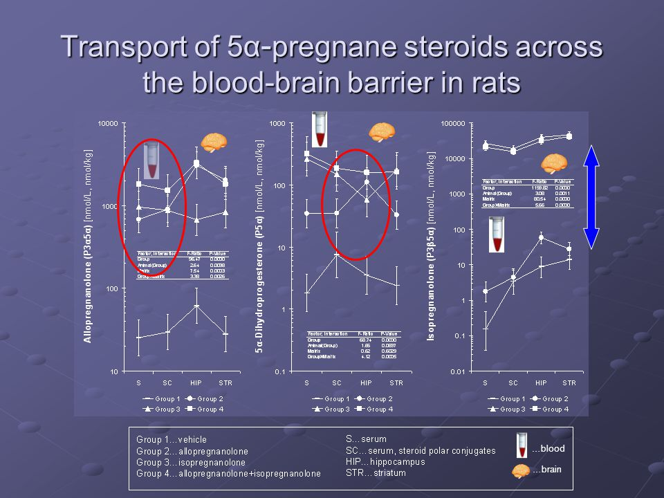 Transport of 5α-pregnane steroids across the blood-brain barrier in rats