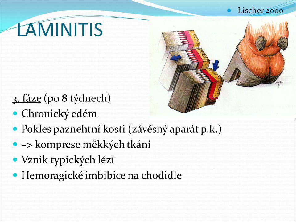 LAMINITIS 3. fáze (po 8 týdnech) Chronický edém