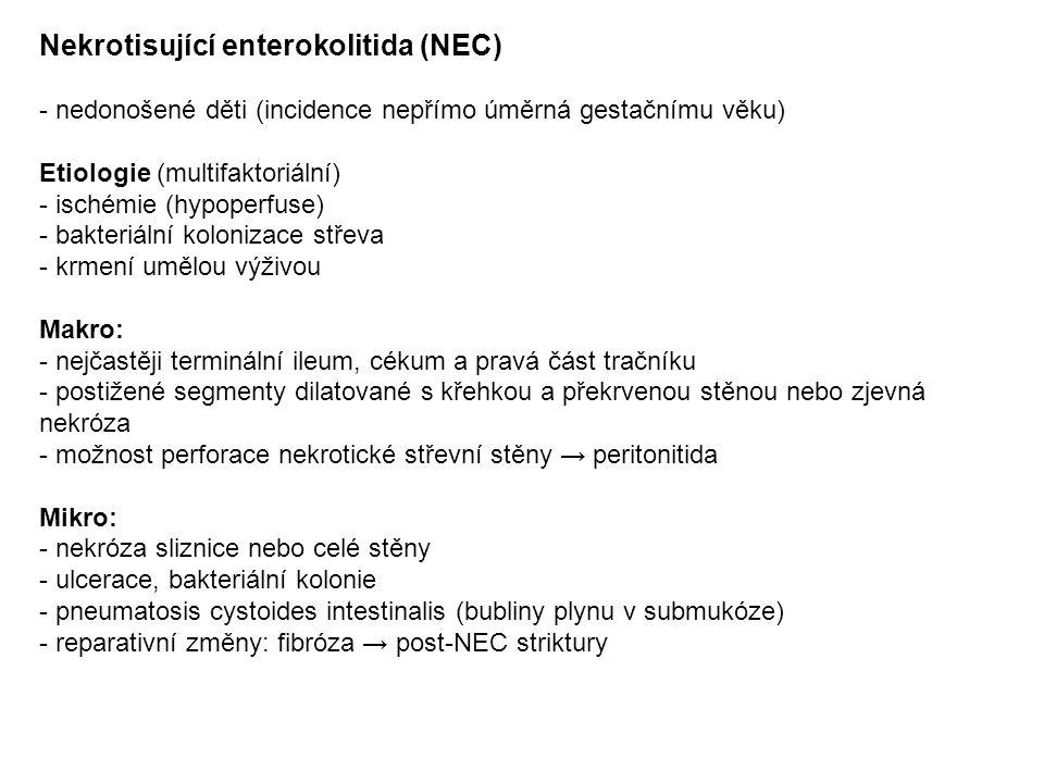 Nekrotisující enterokolitida (NEC)