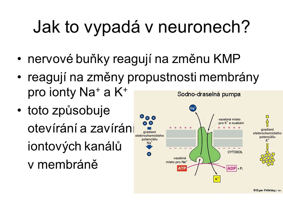 Jak to vypadá v neuronech