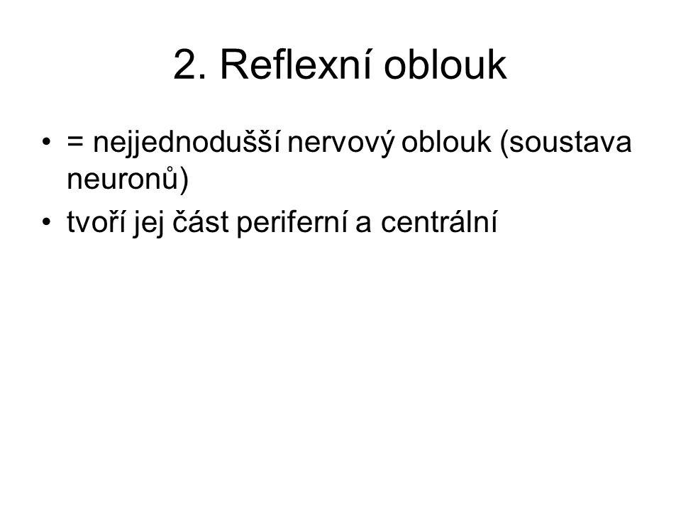 2. Reflexní oblouk = nejjednodušší nervový oblouk (soustava neuronů)