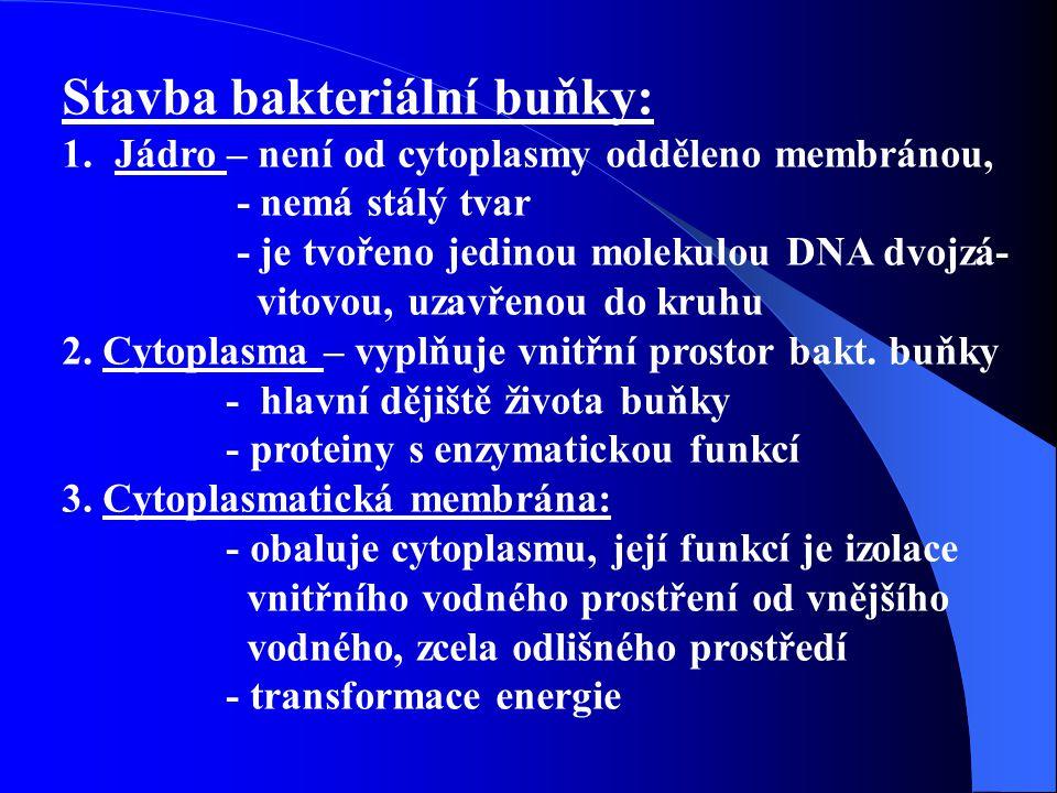 Stavba bakteriální buňky: