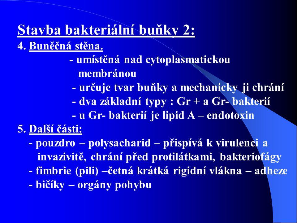 Stavba bakteriální buňky 2: