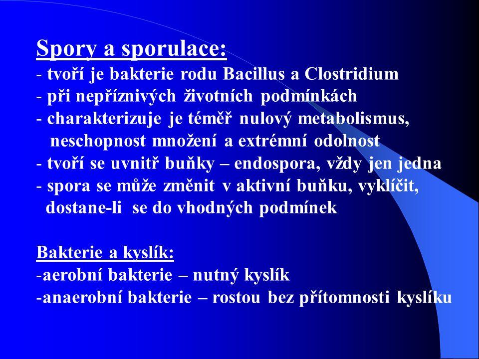 Spory a sporulace: tvoří je bakterie rodu Bacillus a Clostridium