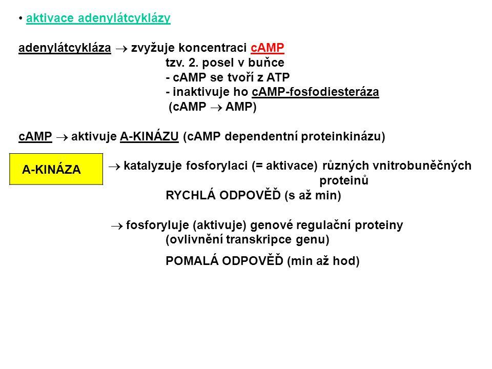 aktivace adenylátcyklázy