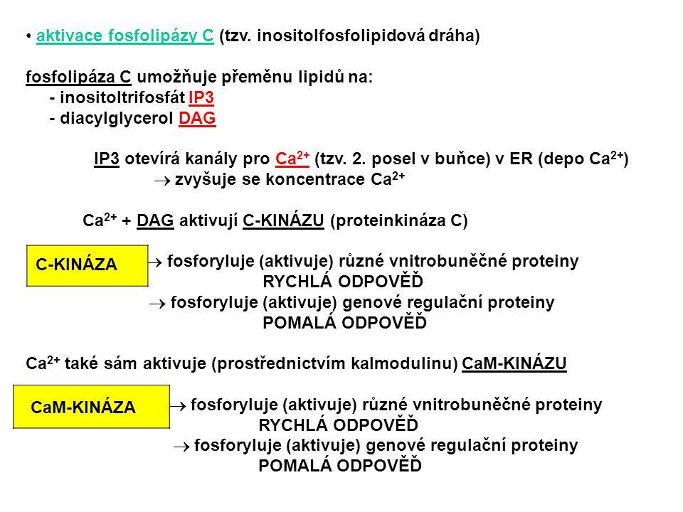 aktivace fosfolipázy C (tzv. inositolfosfolipidová dráha)
