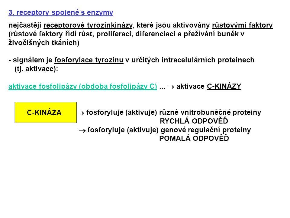3. receptory spojené s enzymy