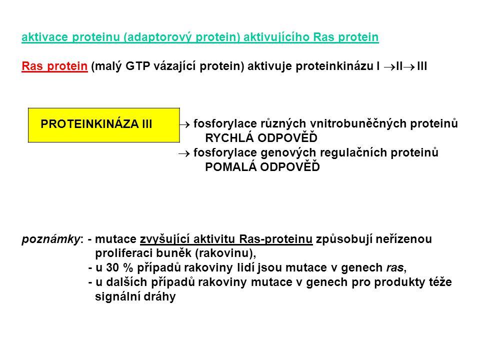 aktivace proteinu (adaptorový protein) aktivujícího Ras protein