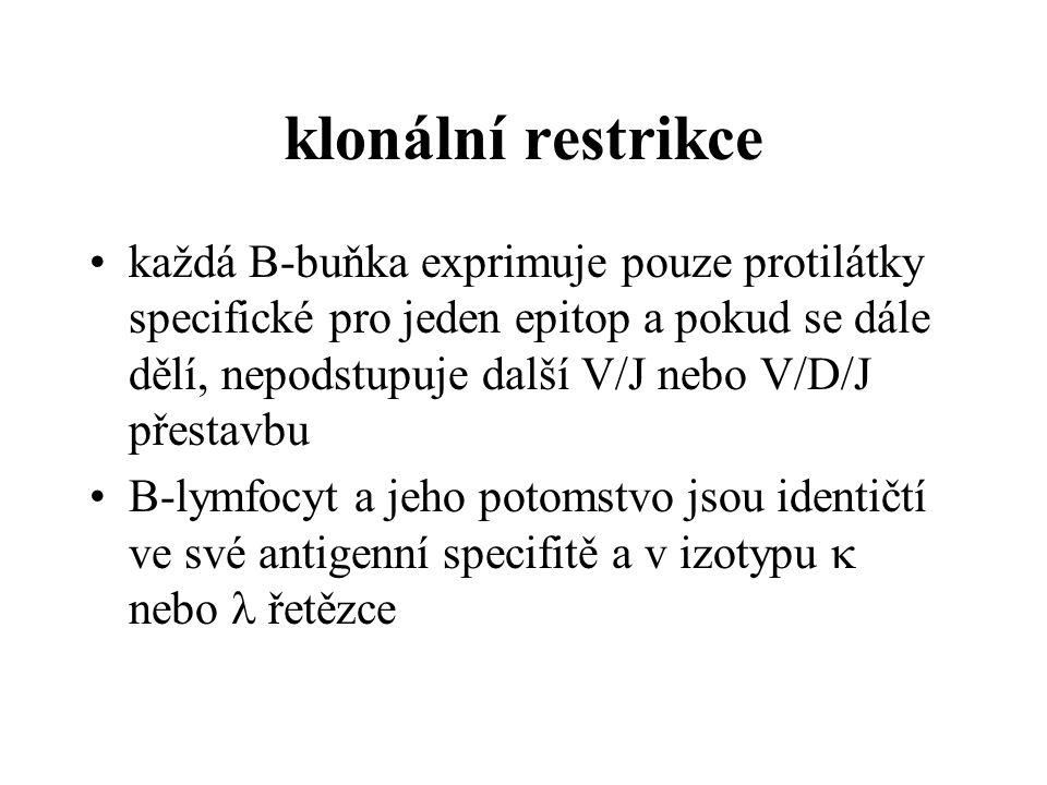 klonální restrikce
