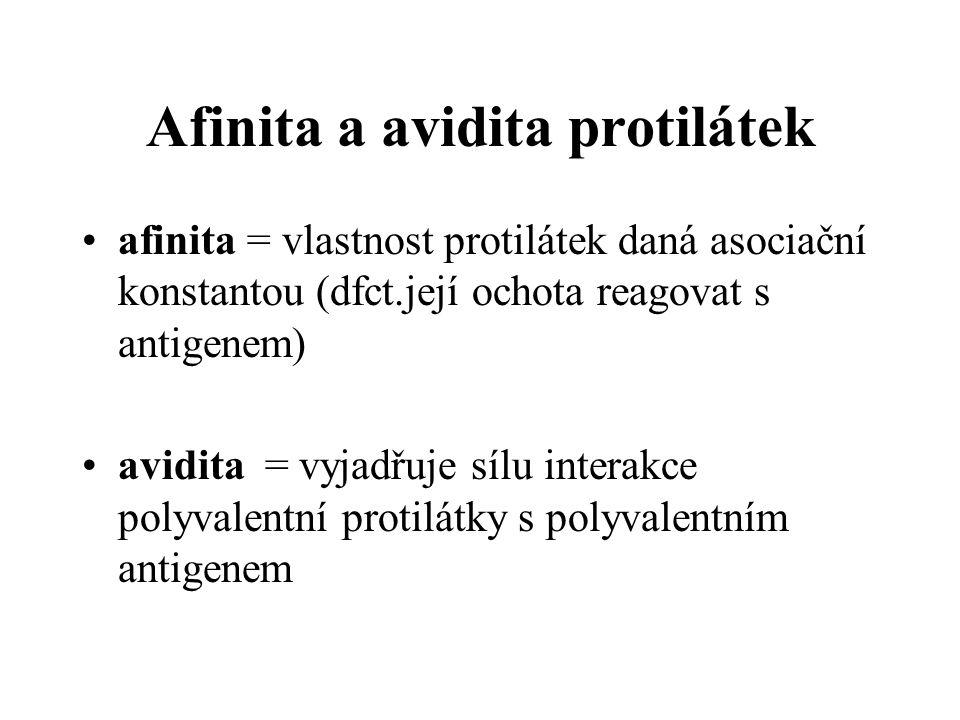 Afinita a avidita protilátek