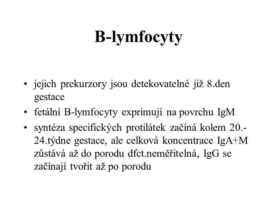 B-lymfocyty jejich prekurzory jsou detekovatelné již 8.den gestace