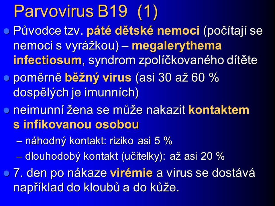 Parvovirus B19 (1) Původce tzv. páté dětské nemoci (počítají se nemoci s vyrážkou) – megalerythema infectiosum, syndrom zpolíčkovaného dítěte.