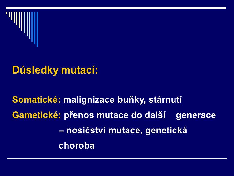 Důsledky mutací: Somatické: malignizace buňky, stárnutí