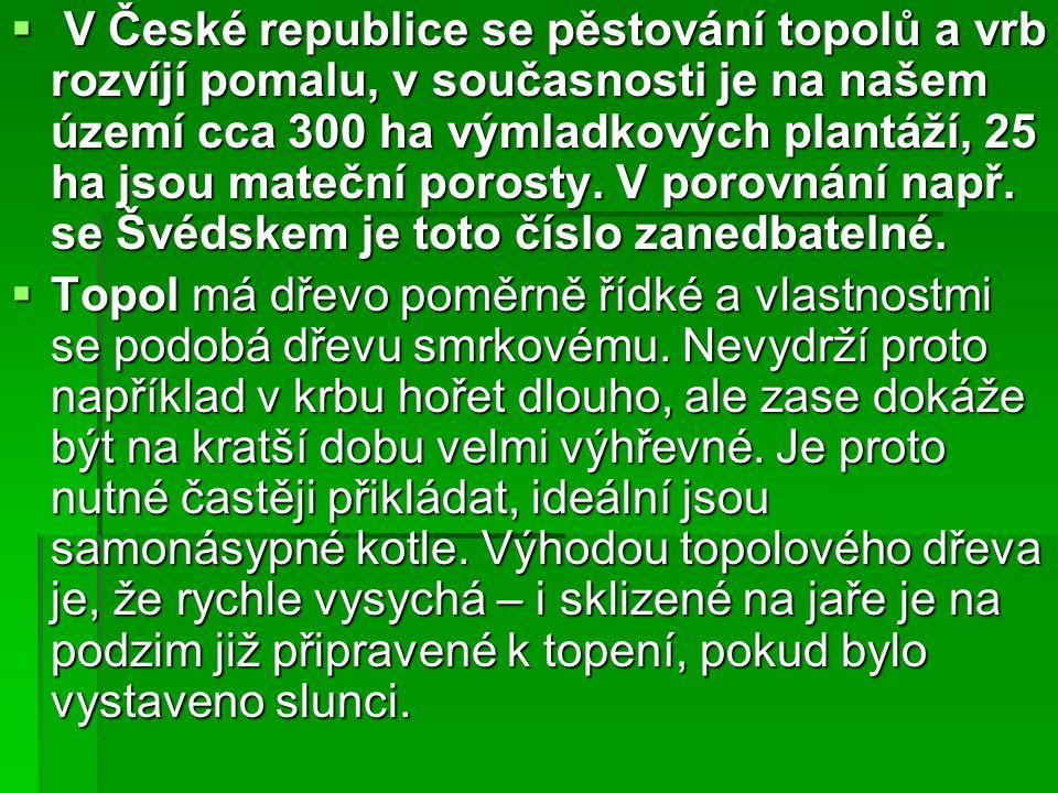 V České republice se pěstování topolů a vrb rozvíjí pomalu, v současnosti je na našem území cca 300 ha výmladkových plantáží, 25 ha jsou mateční porosty. V porovnání např. se Švédskem je toto číslo zanedbatelné.