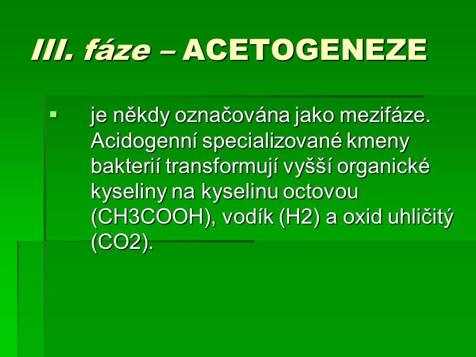 III. fáze – ACETOGENEZE