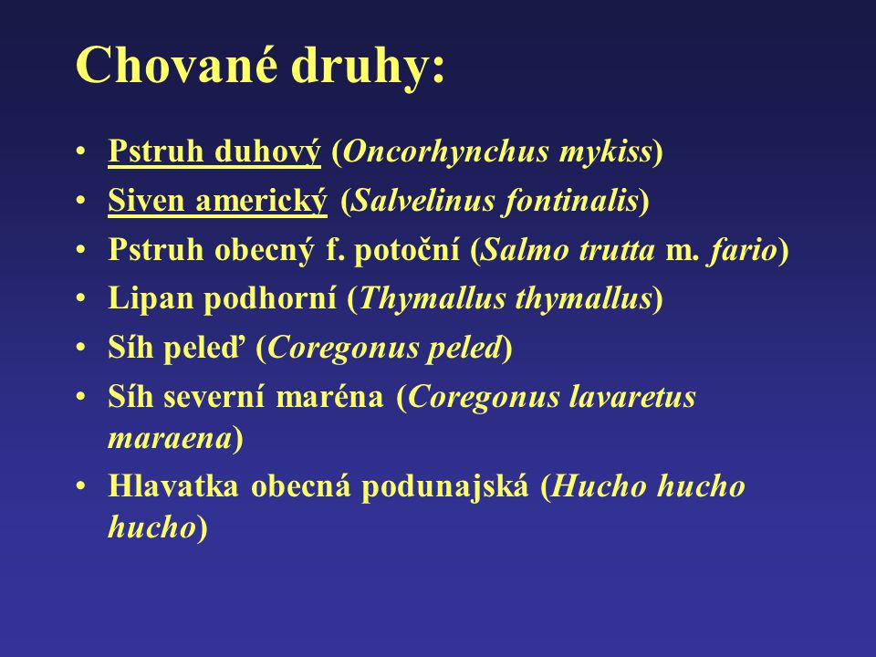 Chované druhy: Pstruh duhový (Oncorhynchus mykiss)