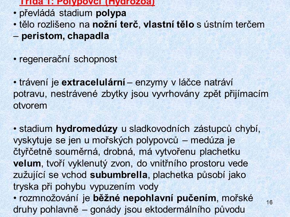 Třída 1: Polypovci (Hydrozoa)