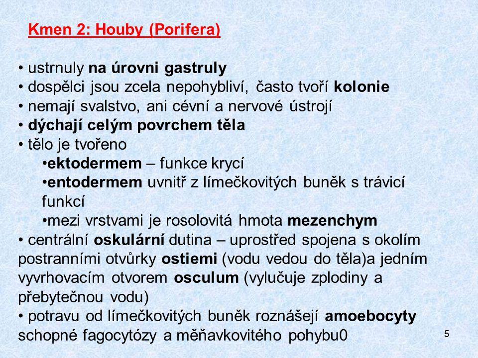 Kmen 2: Houby (Porifera)