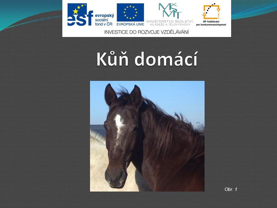 Kůň domácí Obr. 1