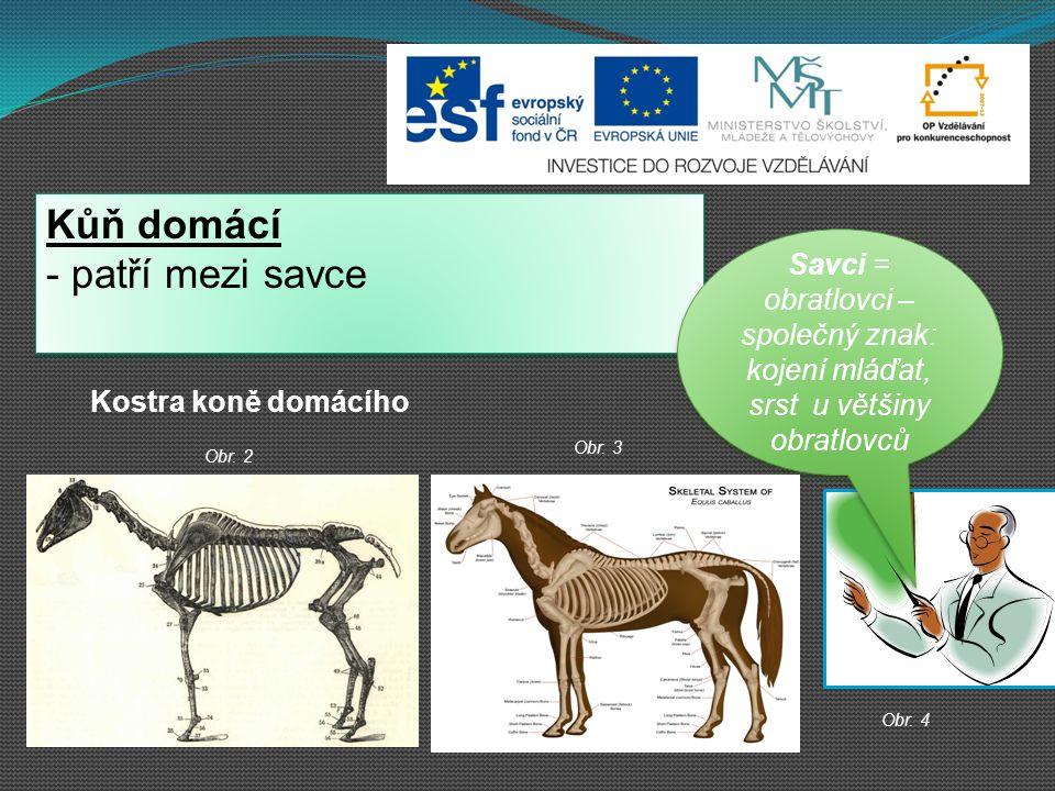 Kůň domácí patří mezi savce