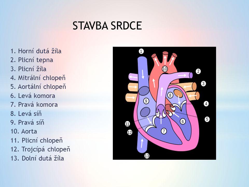 STAVBA SRDCE 1. Horní dutá žíla 2. Plicní tepna 3. Plicní žíla