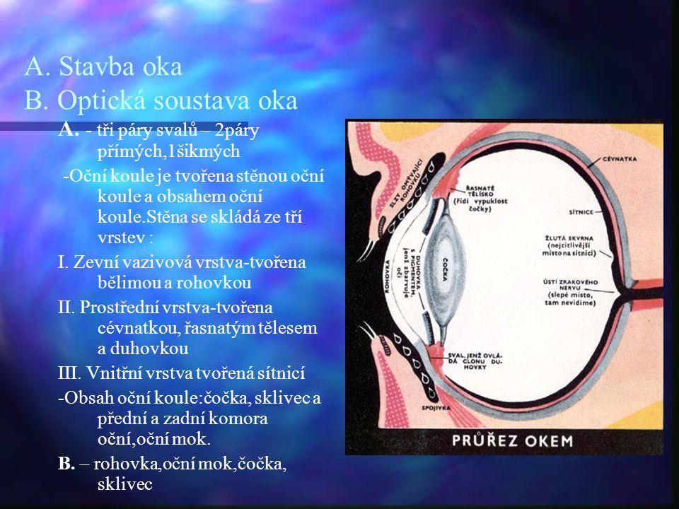 A. Stavba oka B. Optická soustava oka