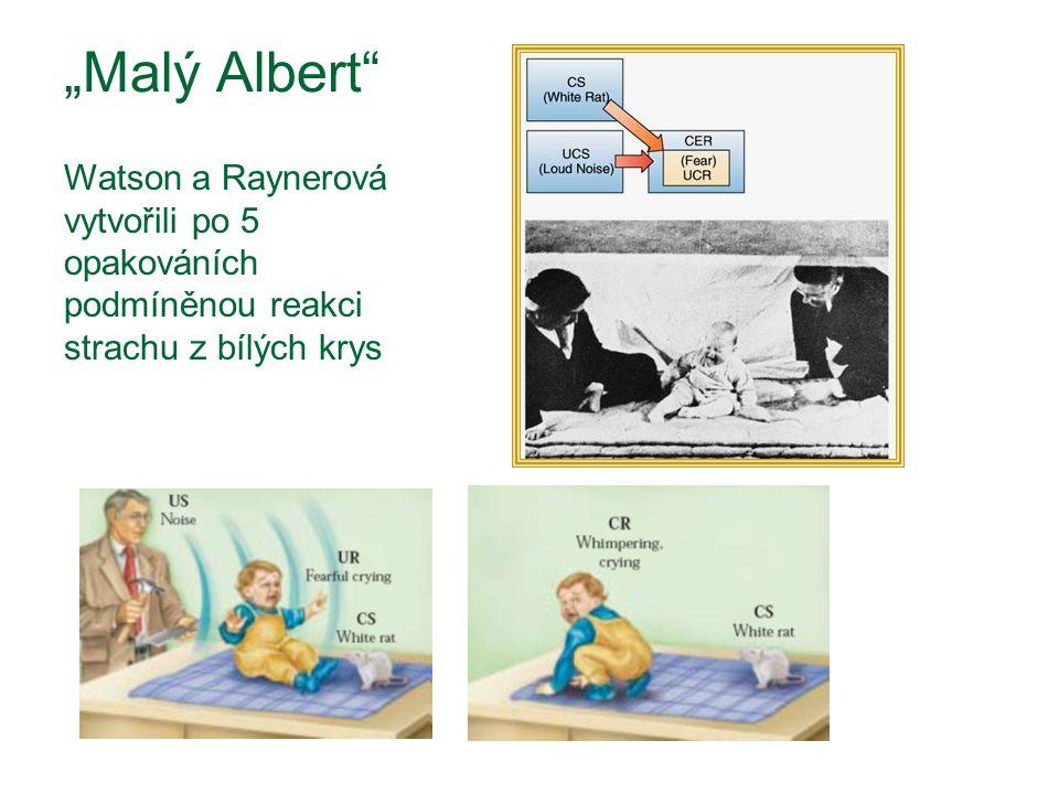 """""""Malý Albert Watson a Raynerová vytvořili po 5 opakováních podmíněnou reakci strachu z bílých krys"""