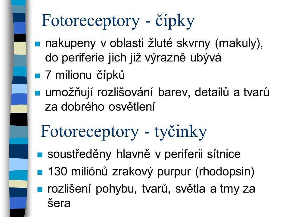 Fotoreceptory - tyčinky