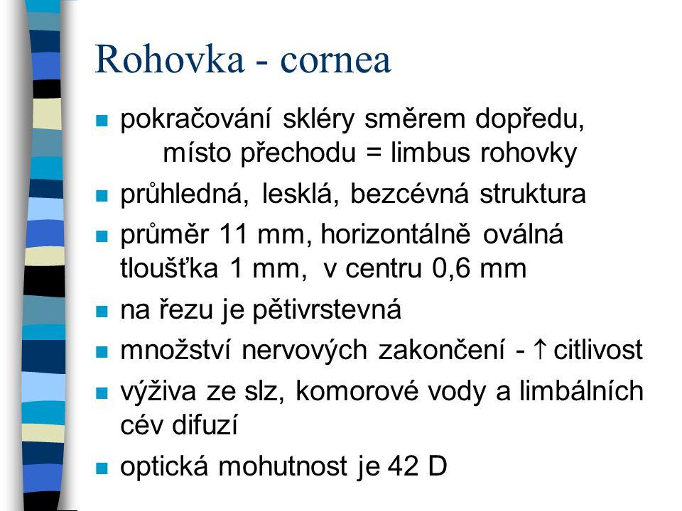 Rohovka - cornea pokračování skléry směrem dopředu, místo přechodu = limbus rohovky. průhledná, lesklá, bezcévná struktura.