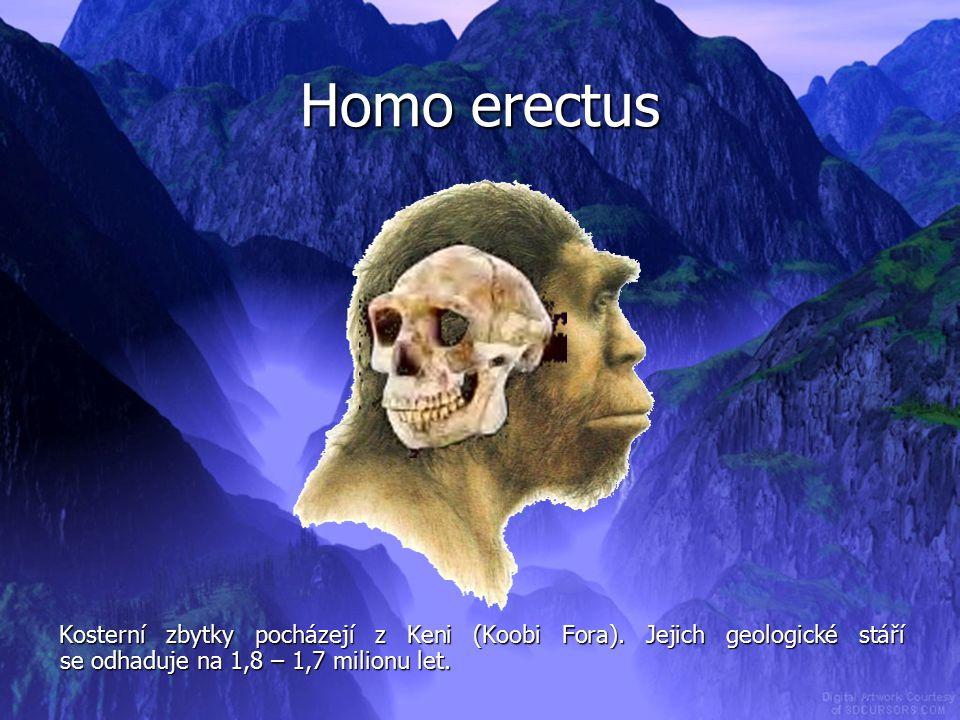 Homo erectus Kosterní zbytky pocházejí z Keni (Koobi Fora).