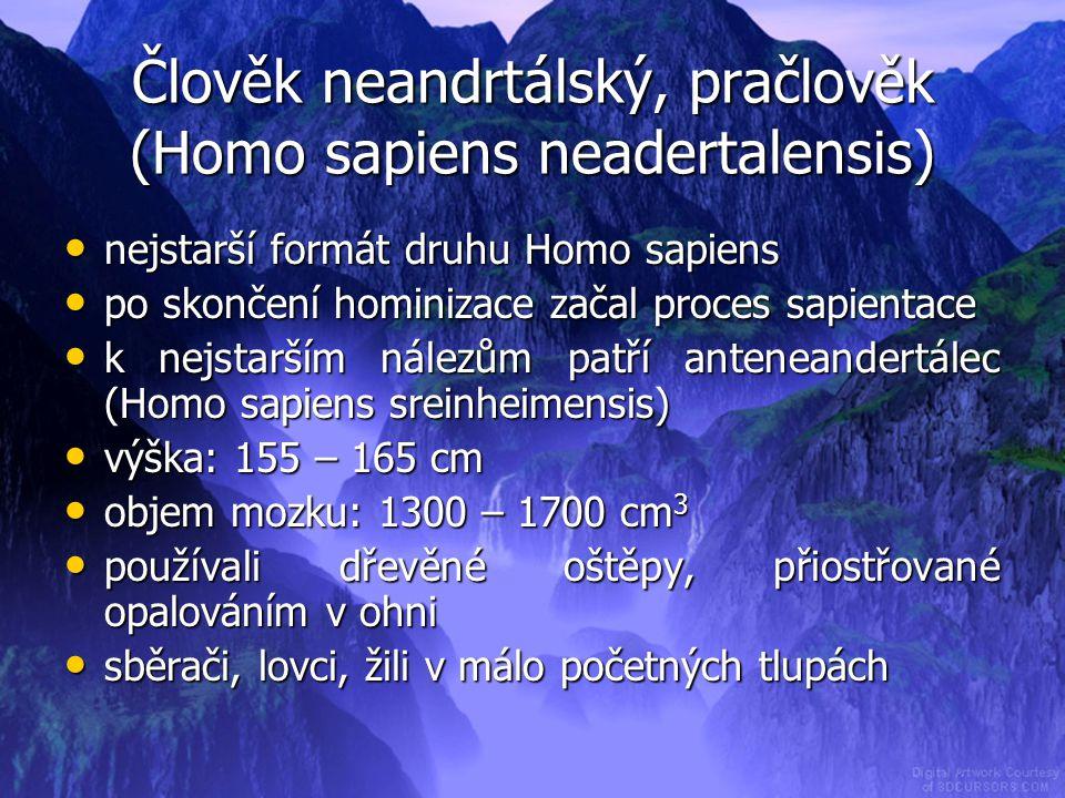 Člověk neandrtálský, pračlověk (Homo sapiens neadertalensis)