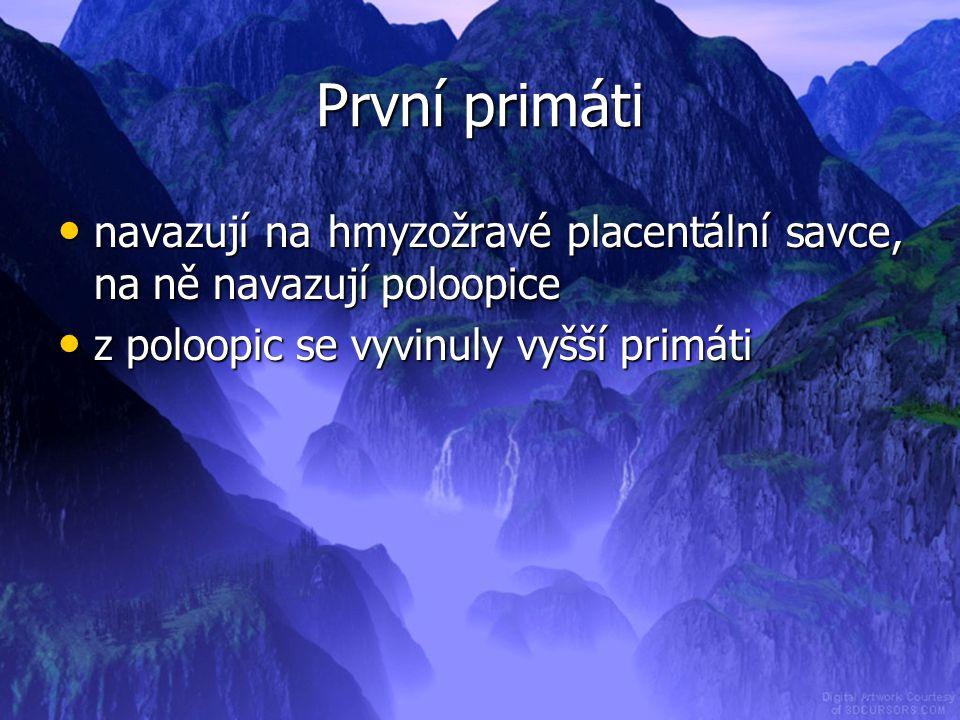 První primáti navazují na hmyzožravé placentální savce, na ně navazují poloopice.