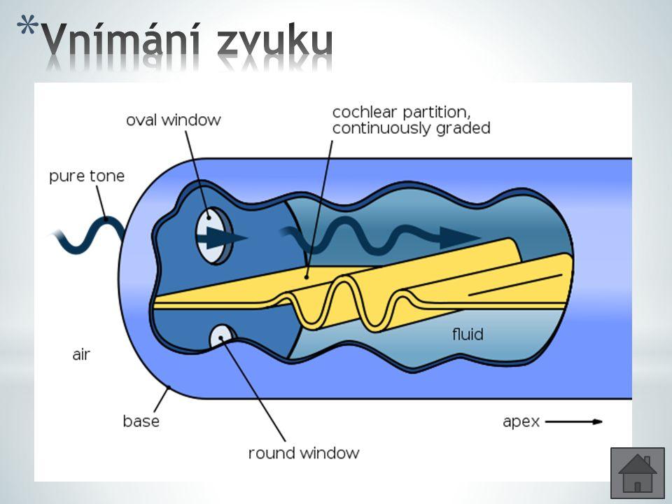 Vnímání zvuku Kmity v bubínku se přenesou sluchovými kůstkami na oválné okénko a pak na perilymfu.